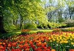 paesaggio-con-fiori-meteo-per-il-1-maggio