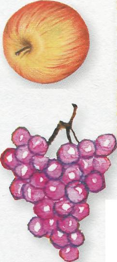 Foto uva