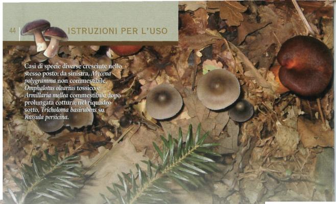 funghi di diverse specie cresciuti vicini